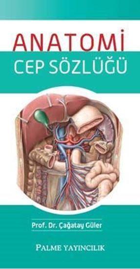 resm Anatomi Cep Sözlüğü