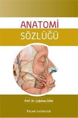 Resim Anatomi Sözlüğü