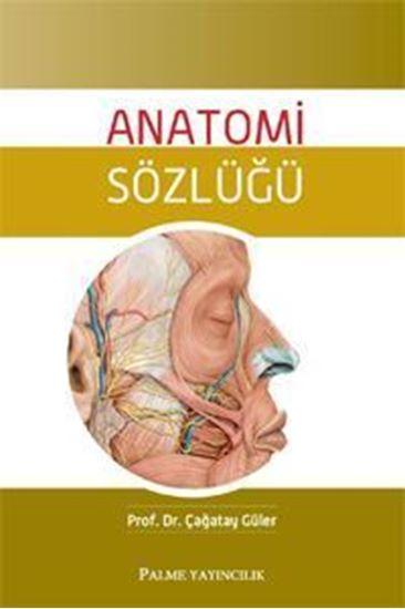 resm Anatomi Sözlüğü